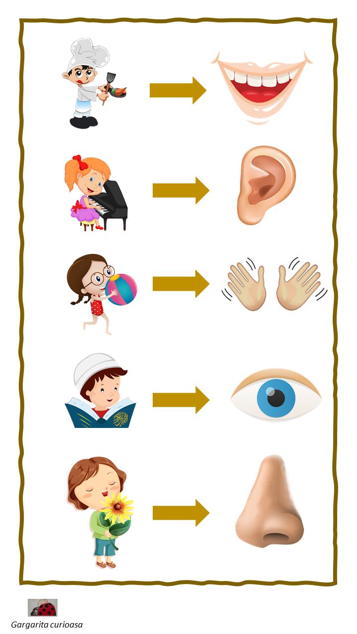 Cele 5 simturi – asocieri